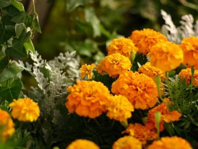 Семена за цветя - за да имате страхотна градина -Полезно