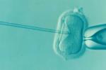 Основни белези на безплодието -Здраве